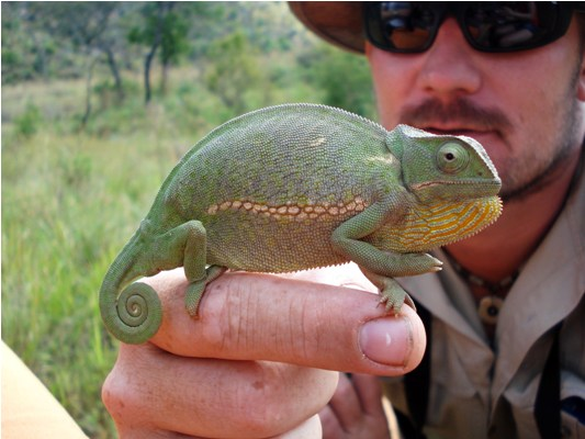 Learn about smaller wildlife too - like this chameleon