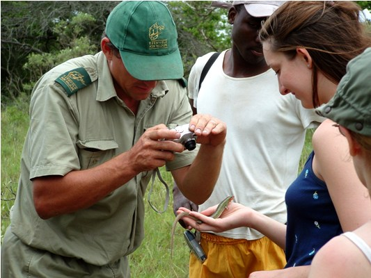 Reptile data recording