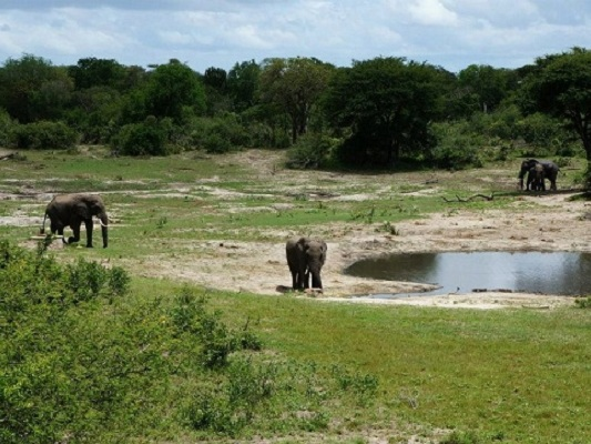 Elephants arrive at a waterhole