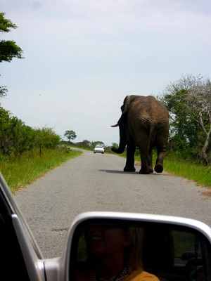 Get close to African wildlife