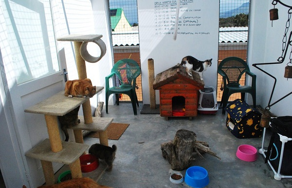 The cat play area