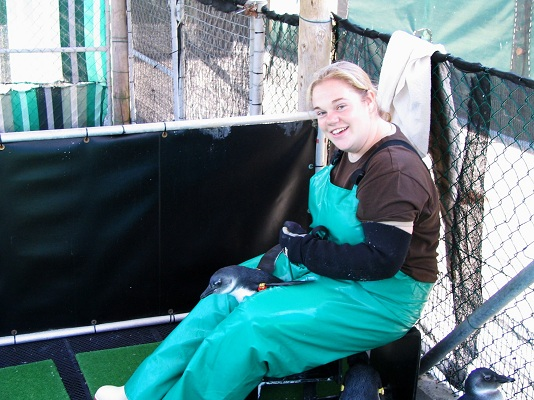 A volunteer works with her first penguin
